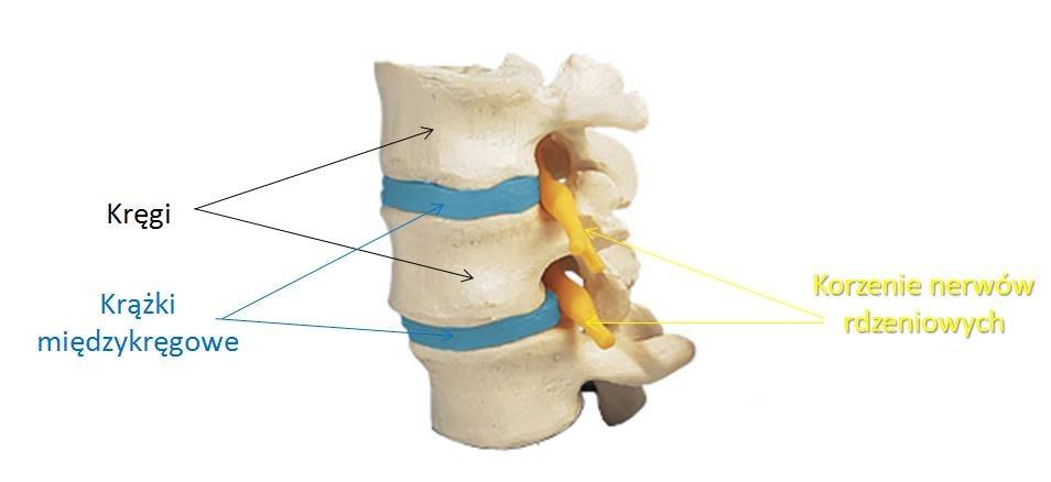 przepuklina fizjoterapia gliwice rehabilitacja
